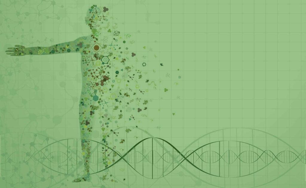 endocannabinoid-system-