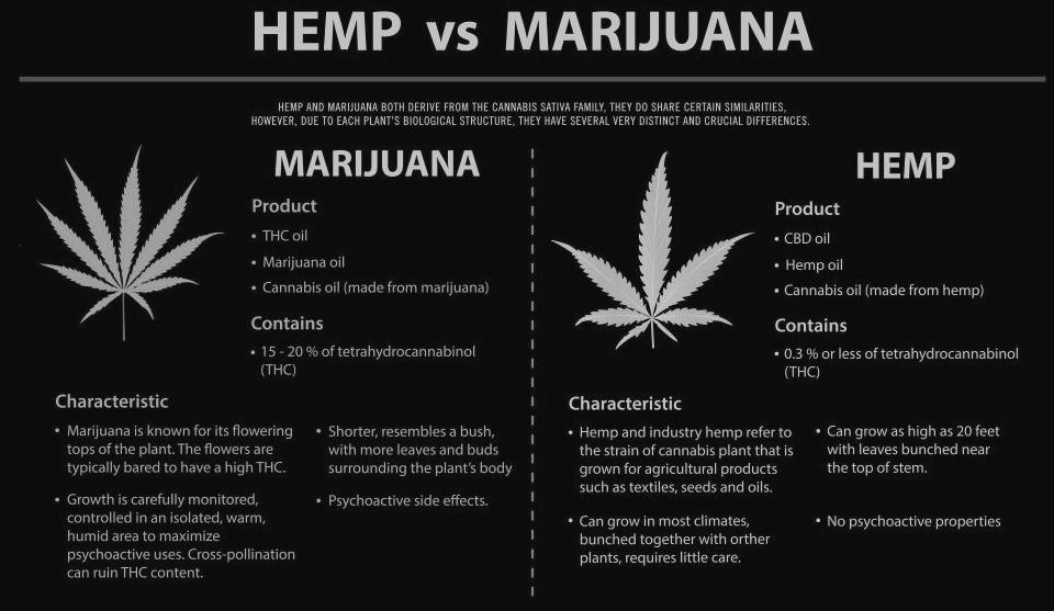 the difference between Hemp and Marijuana plants